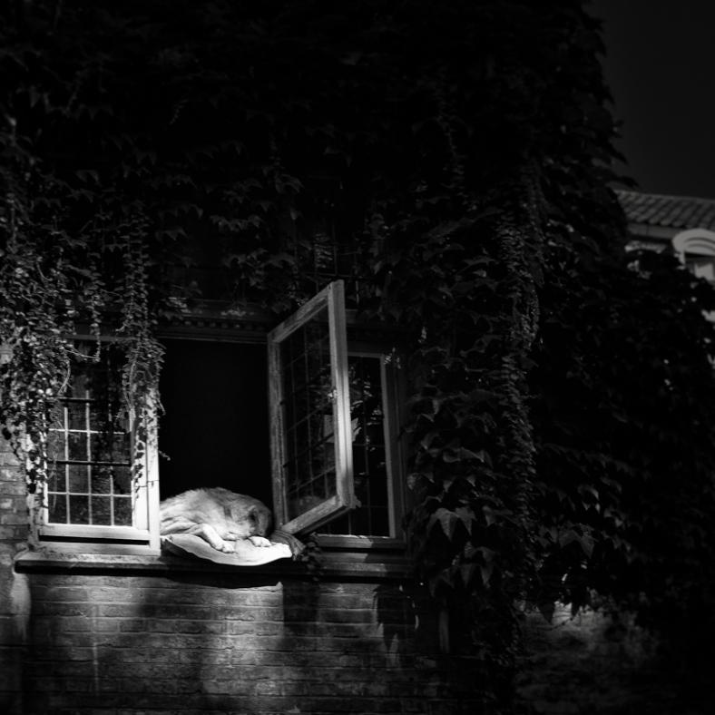 Dog asleep in a window, Bruges, Belgium