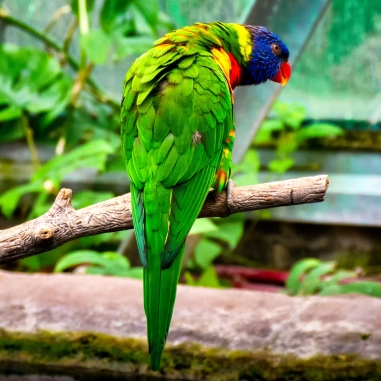A green parrot perched on a branch.